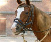 Pferdebesuch in der Schule- Der Tag der Begegnung macht's möglich